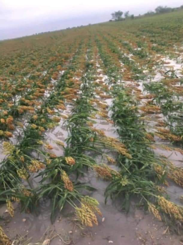Fuertes lluvias dañan agricultura de Ejidos de Rio Bravo